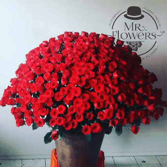 500 Rosas