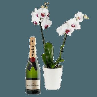 Orquídea & Champagne